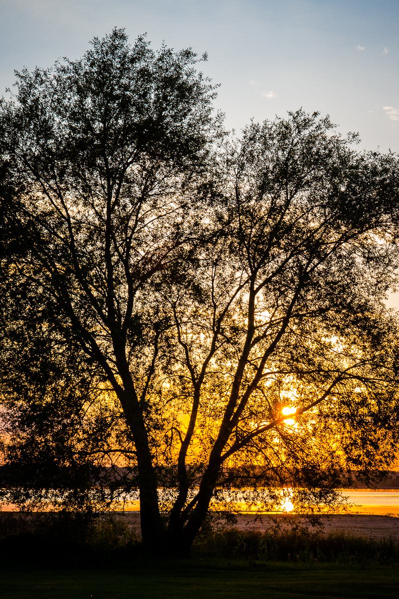Sunset Behind The Tree Via @Atisgailis
