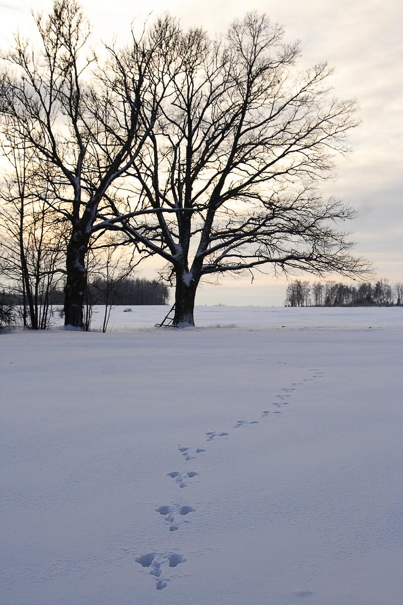 Trail In Snow Via @Atisgailis