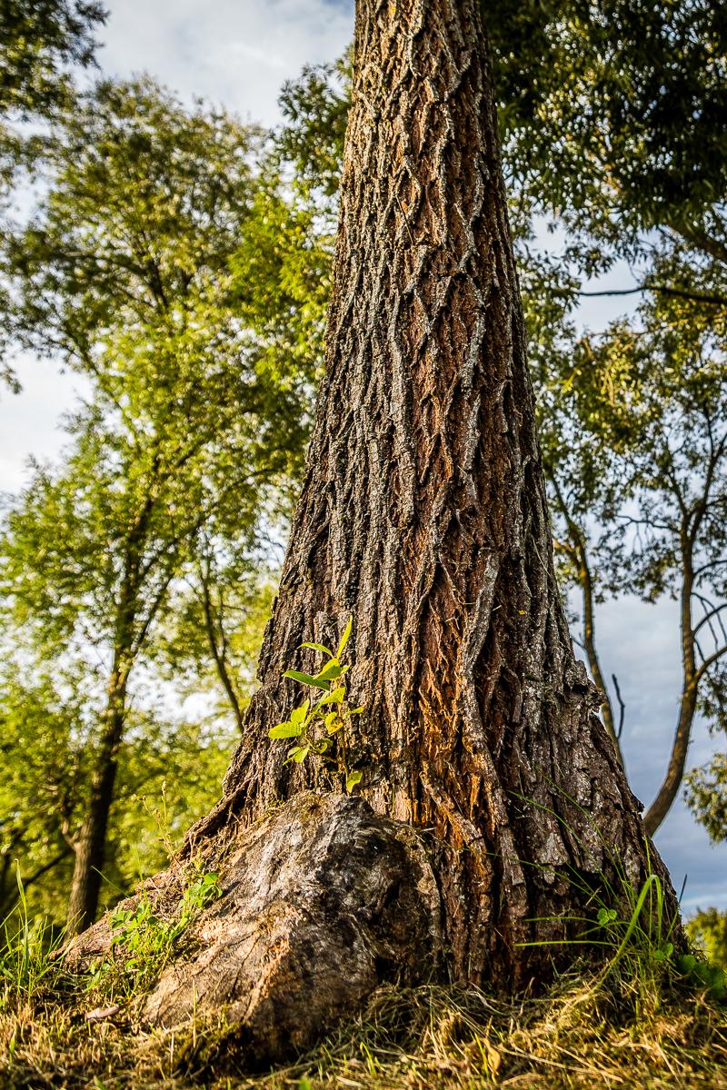 Tree In Forest Via @Atisgailis