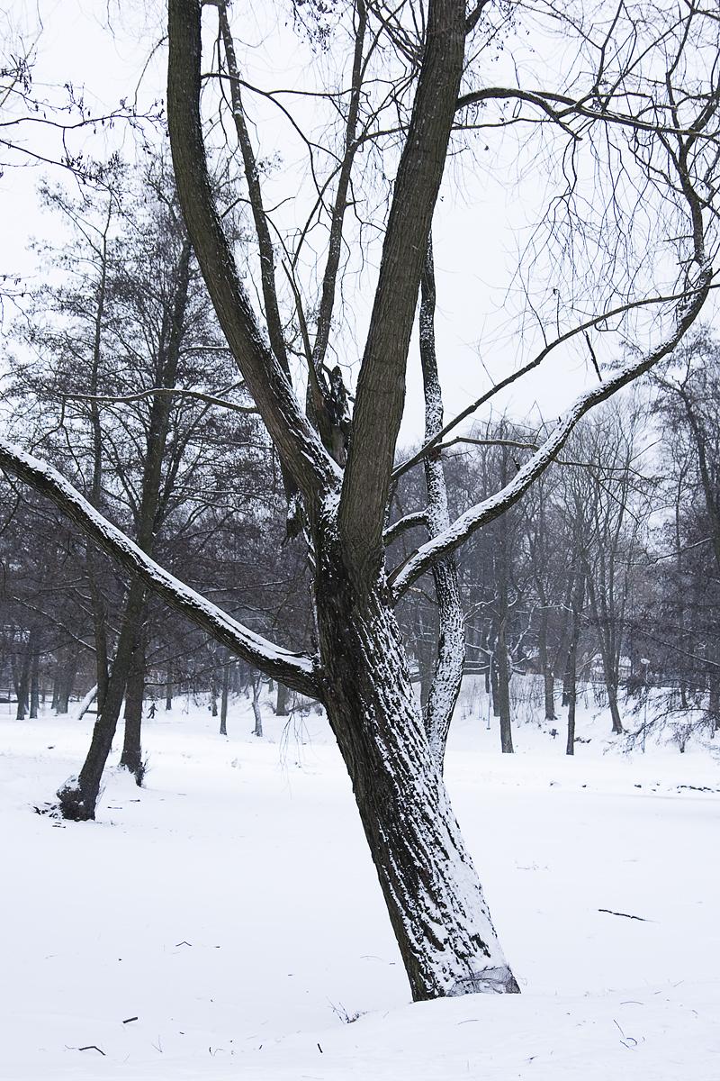 Tree In Winter Via @Atisgailis