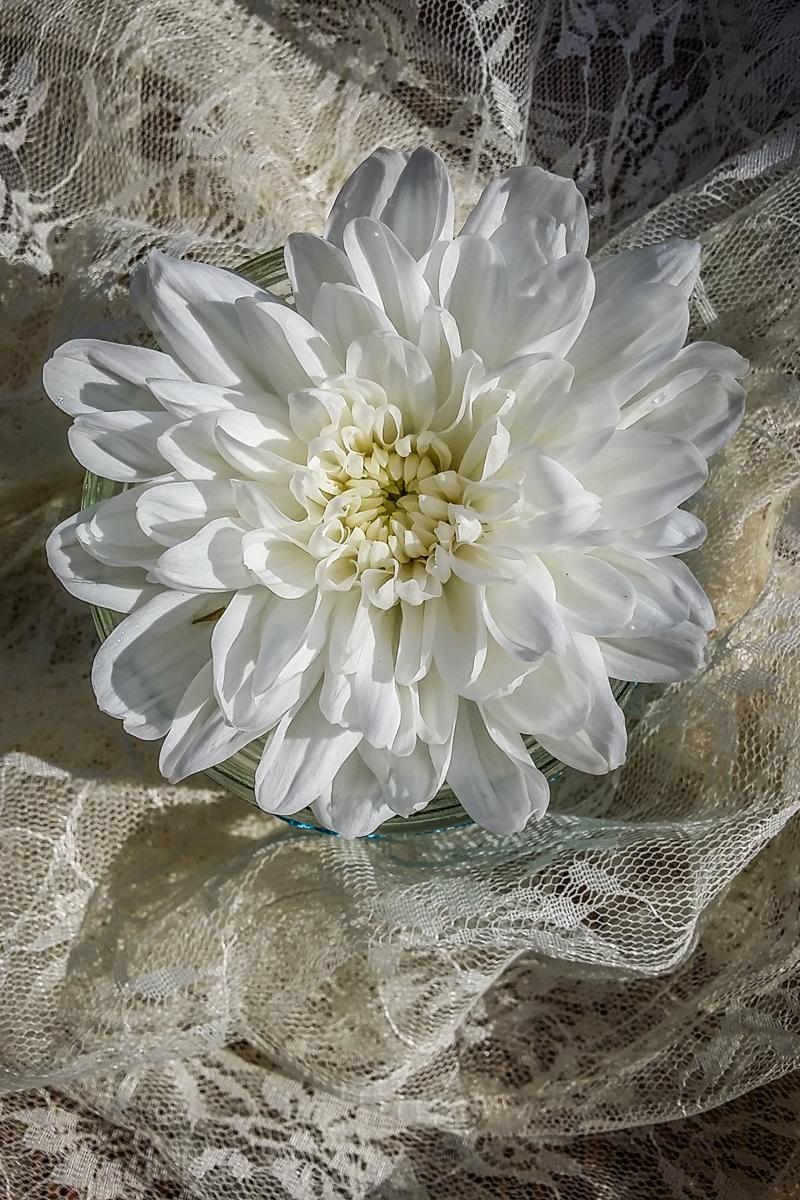 White Chrysanthemum Via @Atisgailis