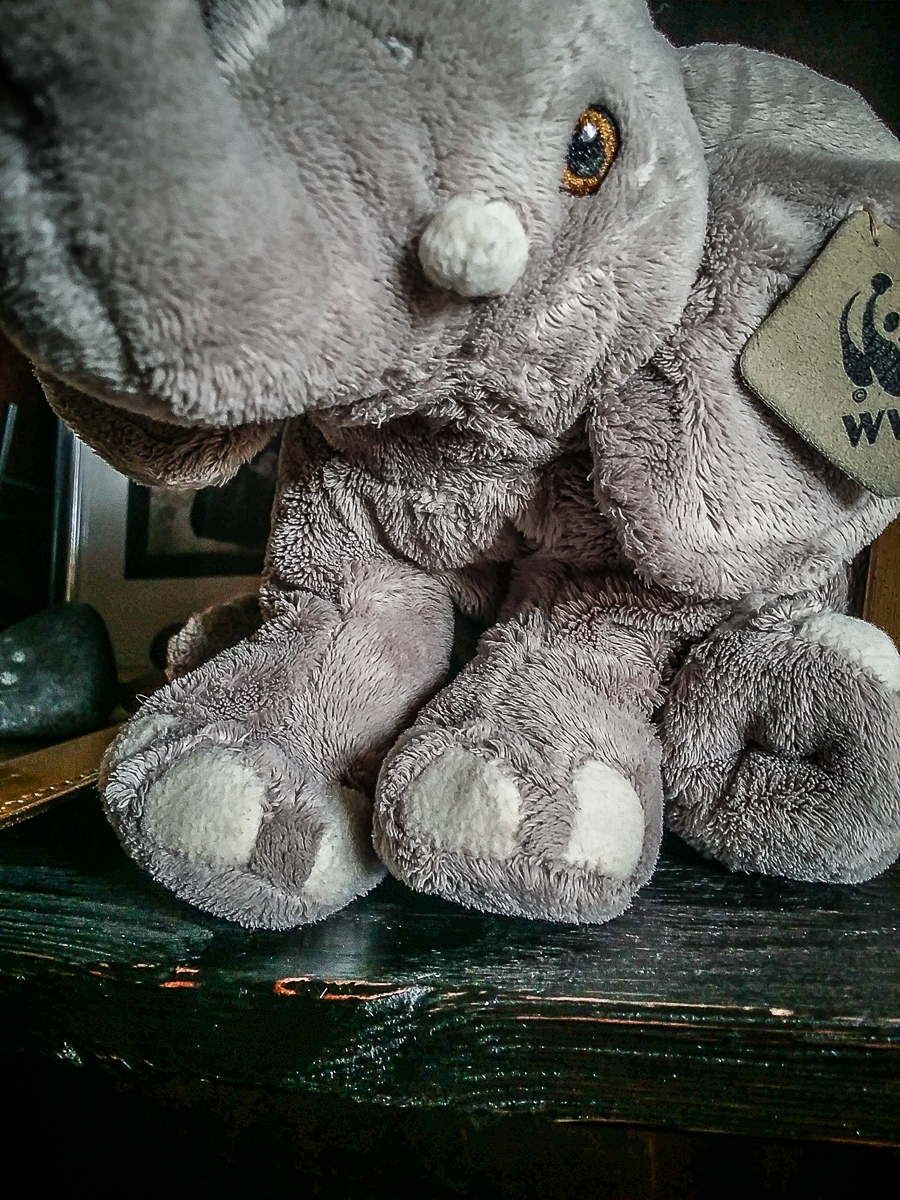 Gray Elephant Via @Atisgailis